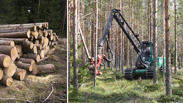 avverkade träd och en skogsmaskin