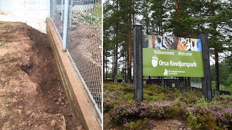 """En skylt där det står """"Orsa rovdjurspark"""" och en infälld bild på ett stängsel med ett grävt hål under."""