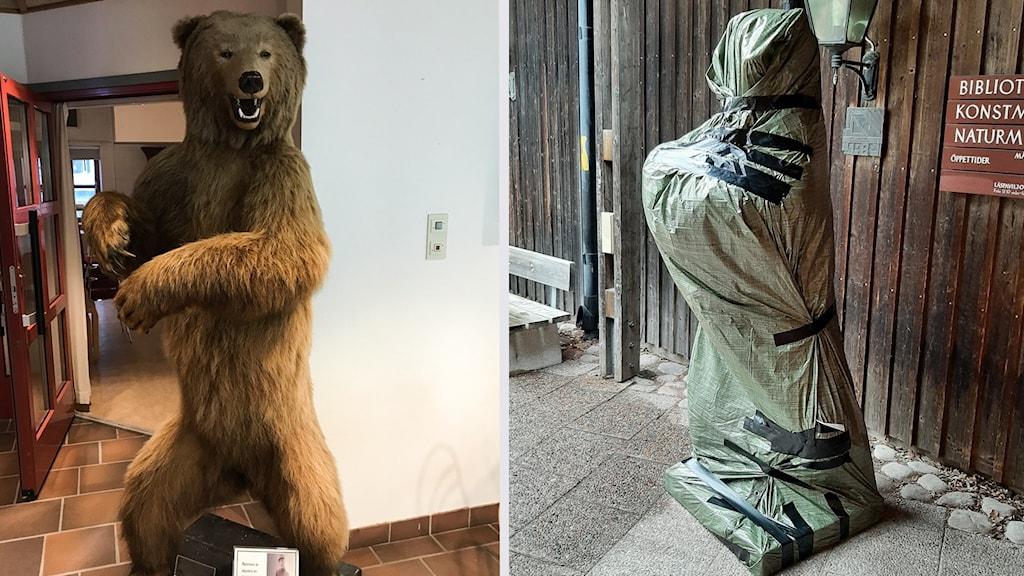 En bild på en uppstoppad björn samt en bild på samma björn inslagen i en grön presenning.