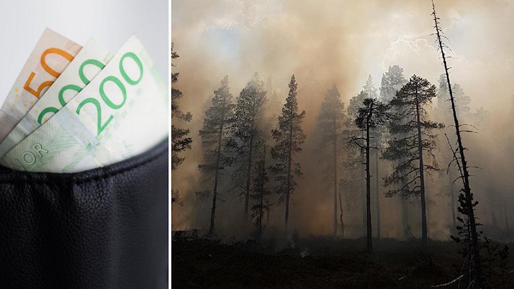 Pengar i en plånbok och skogsbranden norr om Trängslet.