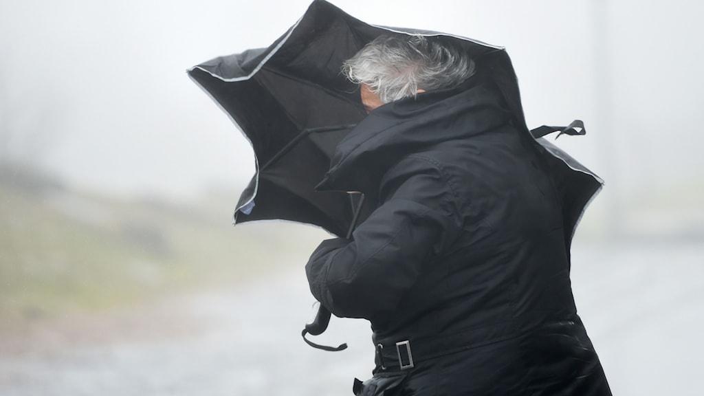 En kvinna går i blåst med ett paraply.