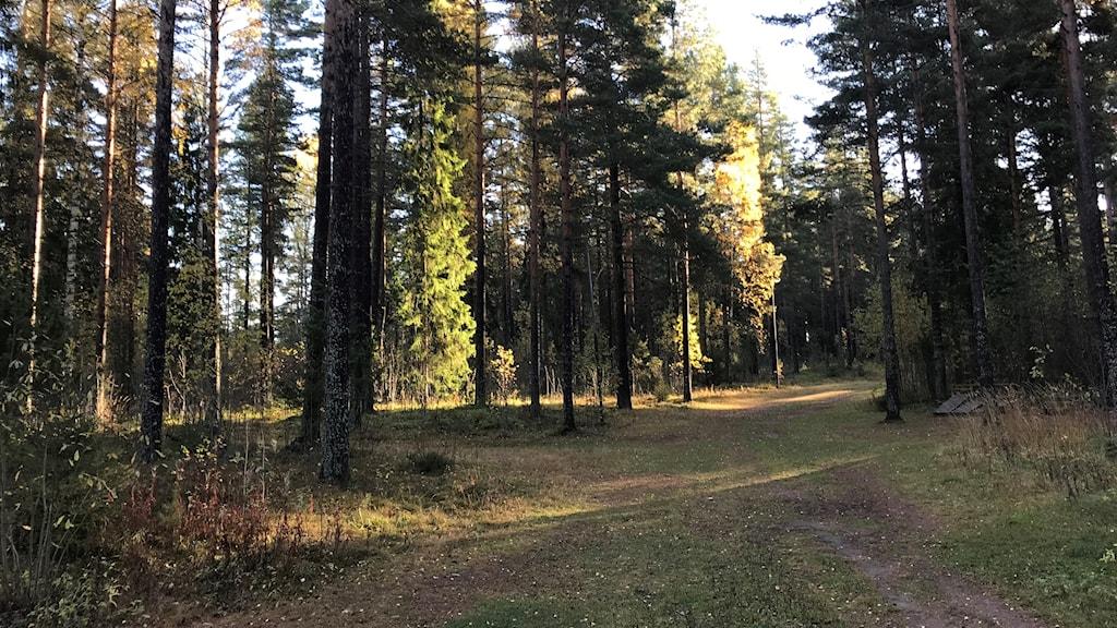Mellsta friluftsområde i Borlänge