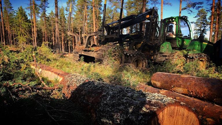 Skogsmaskin vid avverkning norr om Enviken.
