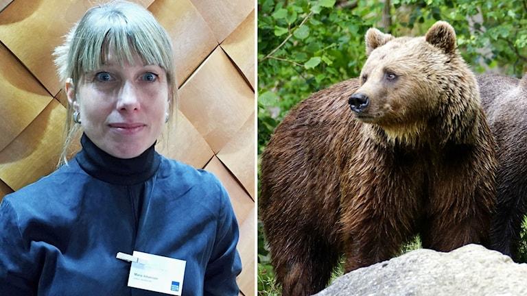Information minskar björnrädsla