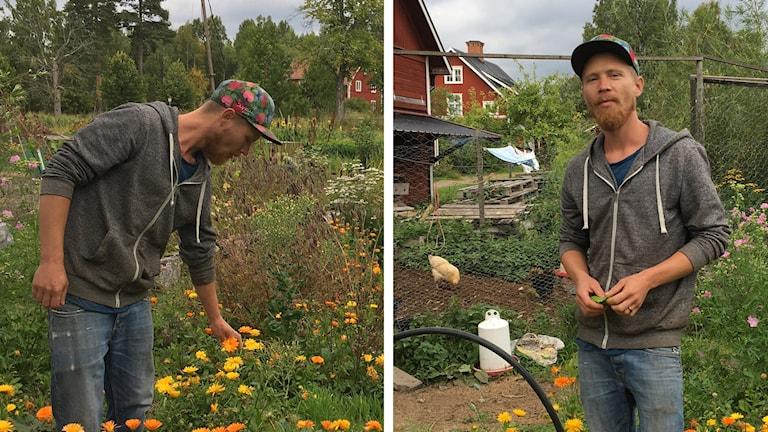 David i sin trädgård