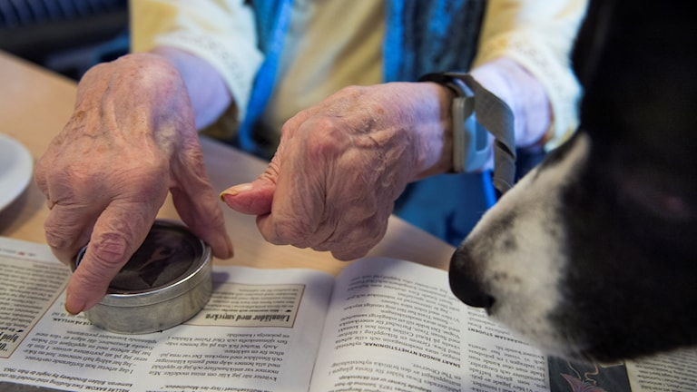 På bilden syns en gammal persons händer, en tidning och en hundnos.