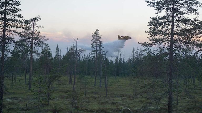 Ett vattenflygplan släpper vatten över branden norr om Trängslet.