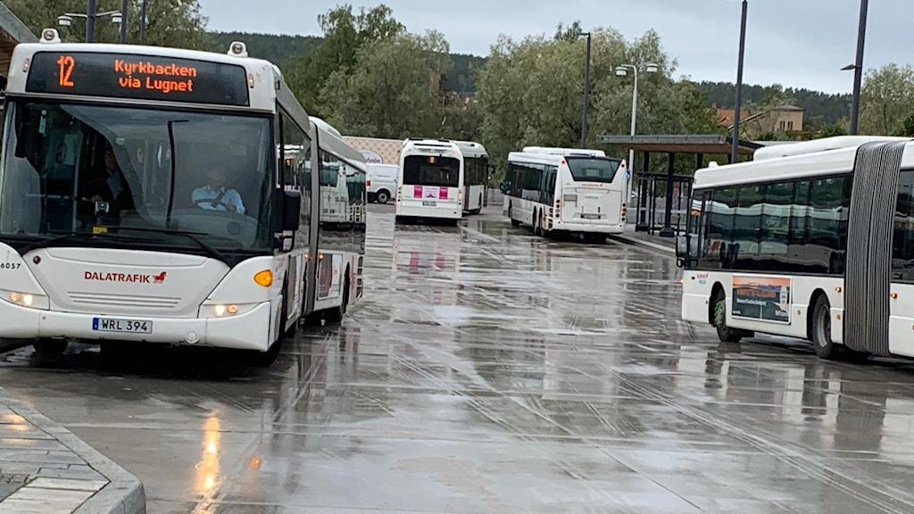 Flera bussar på en regnig väg.