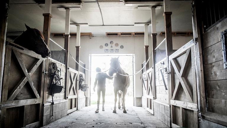 Tjej och häst i stall