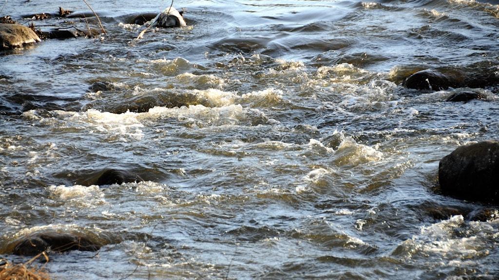 Vårflod i vattendrag