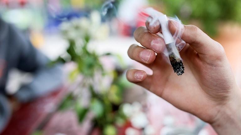 En hand som håller i en cannabis-cigarett