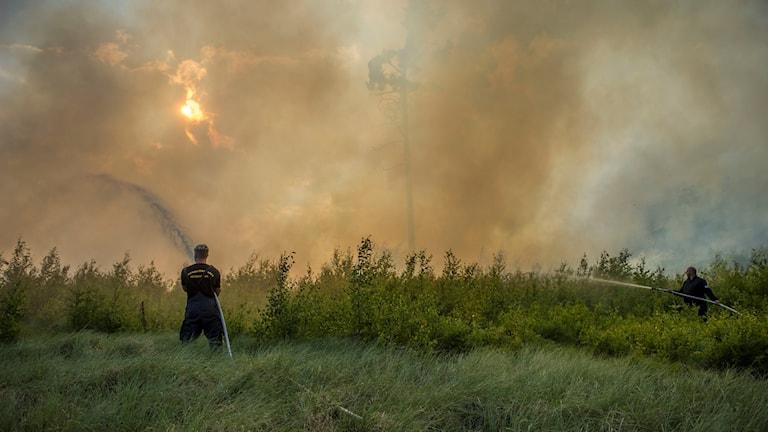 Två brandmän bekämpar eld i skogen