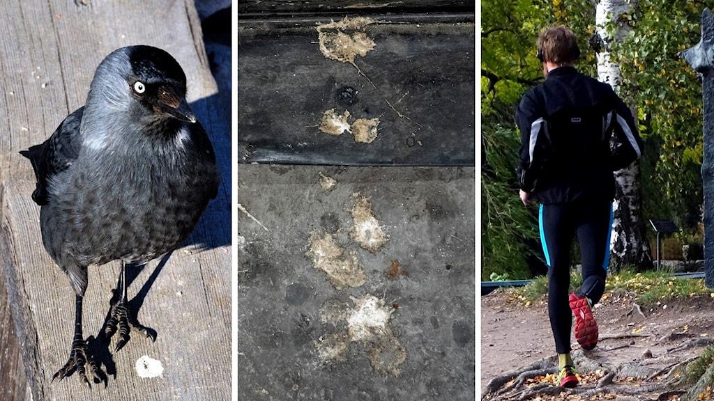 En kaja och fågelbajs på asfalt samt en person som springer i naturen.