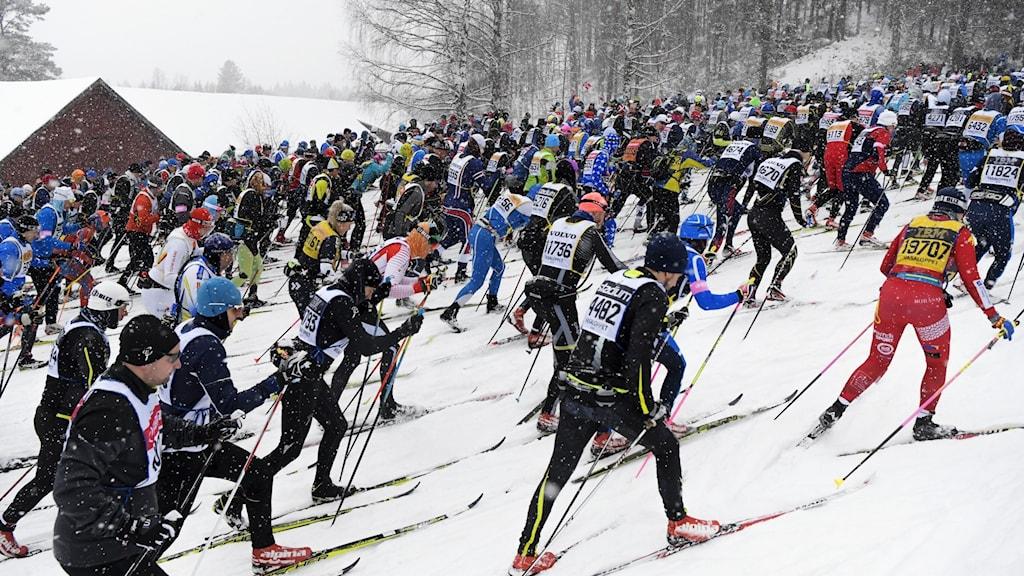 Flera skidåkare åker upp för en backe.