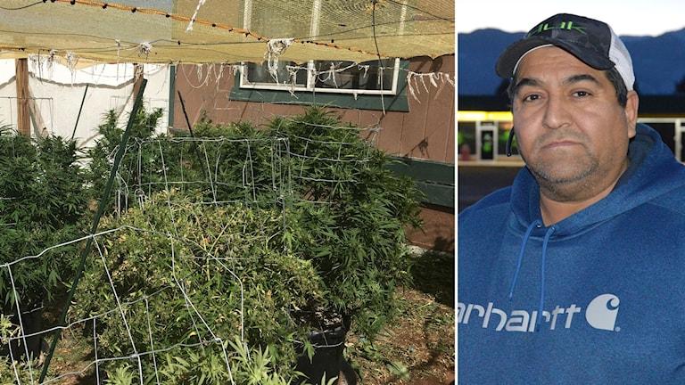 Bilförsäljaren Ricky Salido i Colorado Springs, ångrar att han röstade för en legalisering av marijuana för privet bruk.