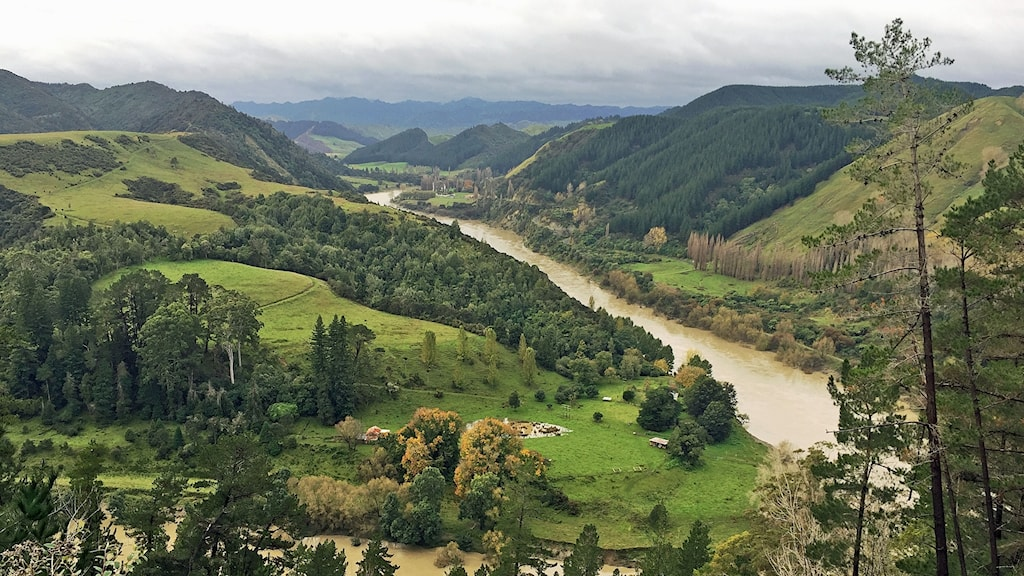 En fantastisk natur omgärdar Whanganui floden men jordbruken har förorenat floden.