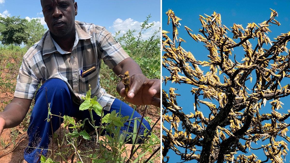 Jordbrukaren Evans Kenjemochembi.