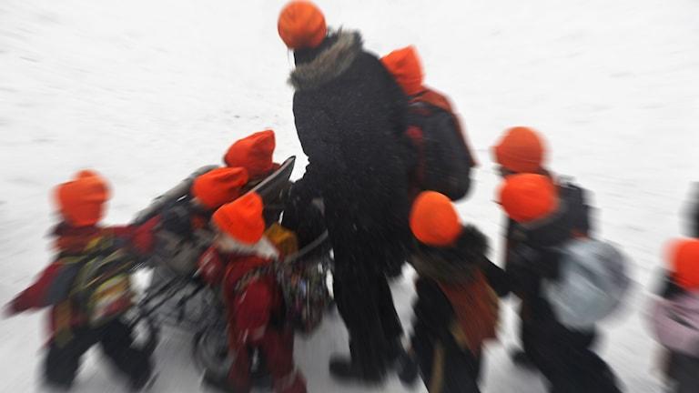 Dagisbarn i röda mössor på promenad i vinterväder. Foto: Hasse Holmberg/TT