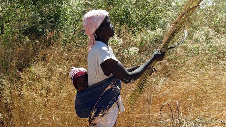 kvinna med barn på ryggen som plockar gräs