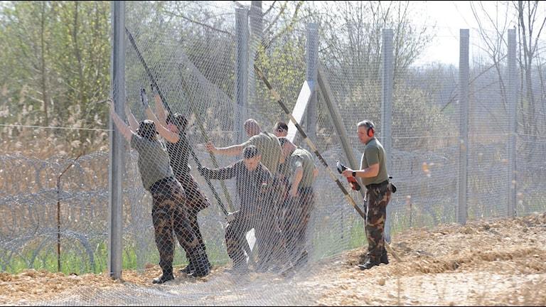 Ungerska soldater bygger ett tillfälligt stängsel på gränsen mellan Ungern och Serbien för att förhindra migranter från att ta sig in i landet.