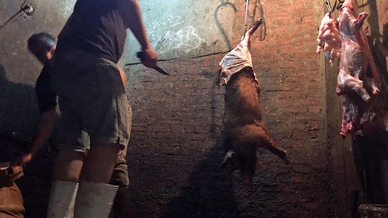 Slaktarsonen Magdi Rumaneh. Han och brodern Milad slaktar grisar på övervåningen till slakteriet