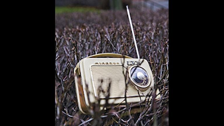 Radio. Foto: Mattias Ahlm / SR