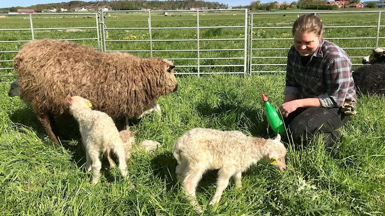Kvinna sitter på huk tillsammans med får och lamm i en hage.