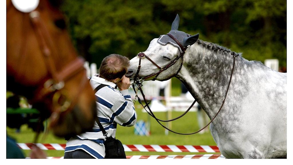 Genrebild. Hästar på tävling.