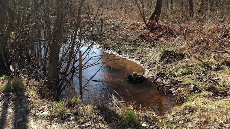 PFAS finns kvar i marken kring vattenverket i Kallinge. I bäckarna har prover tagits på vatten och fisk.