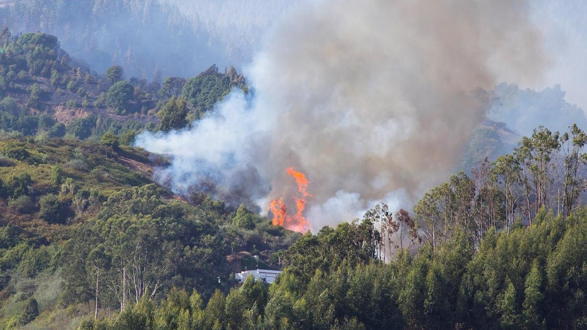 Skogsbranden på Gran Canaria.