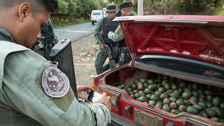 Vid en av utfarterna från Tancítaro har en bil stoppats med bakluckan full av avokado. Stölder är vanliga och för att föra ut frukten måste man kunna visa upp ett giltigt dokument.
