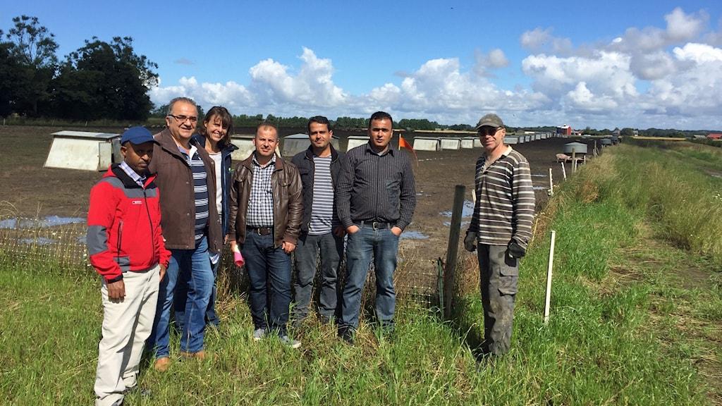 Fem nyanlända på besök hos lantbrukaren Per-Erik Hansson på en ekogrisgård i Strövelstorp utanför Ängelholm (nr 2 från vänster). Till höger om Per-Erik står Sara Johnsson, Hushållningssällskapet, och Abdulkarim Alhalifa från Syrien, som fick jobbet.