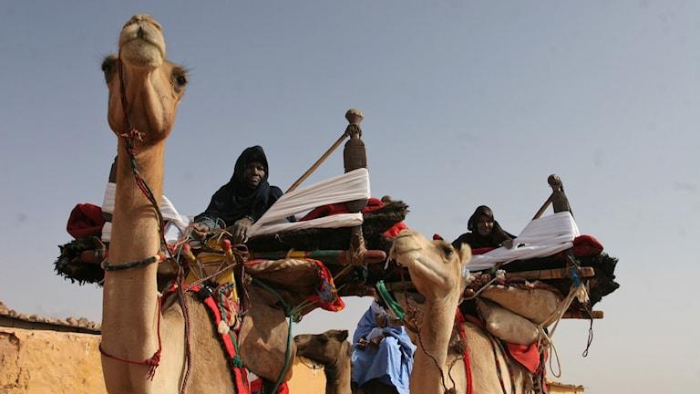 Ceremoni vid västsahariskt flyktingläger i Algeriet.