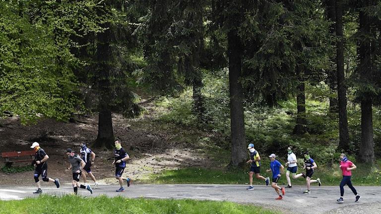 En grupp löpare i skogen