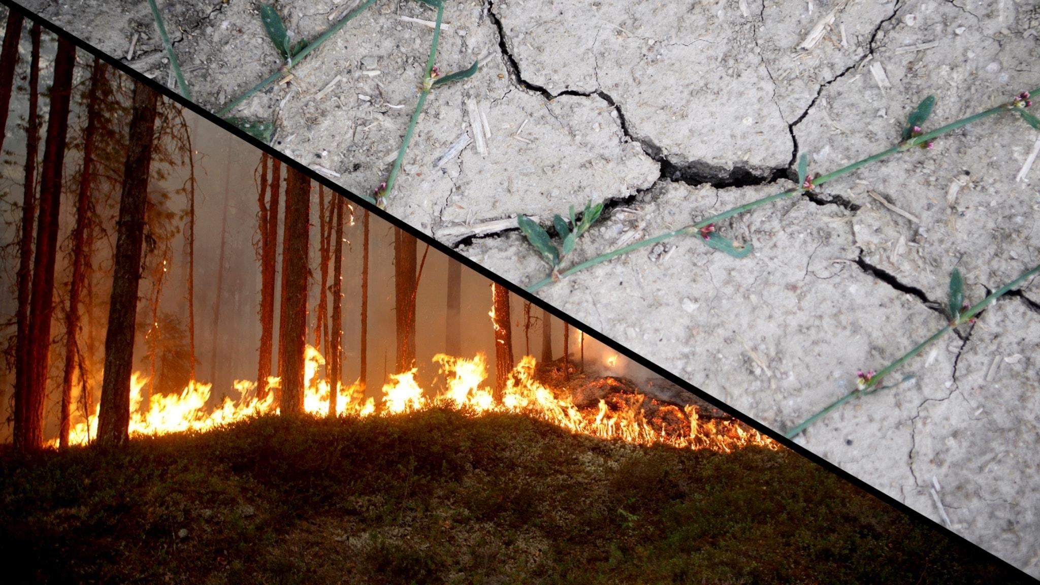 P3 Nyheter om bränderna och torkan