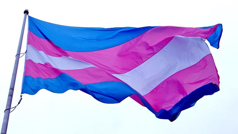Prideflaggan för transpersoner/TT