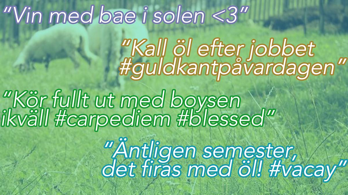 Alkohol, citat, får, bä. Foto: Alexander Letic/Sveriges Radio