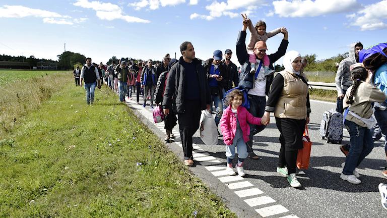Flyktingar som går längs vägen i Danmark Foto: Bax Lindhardt/TT