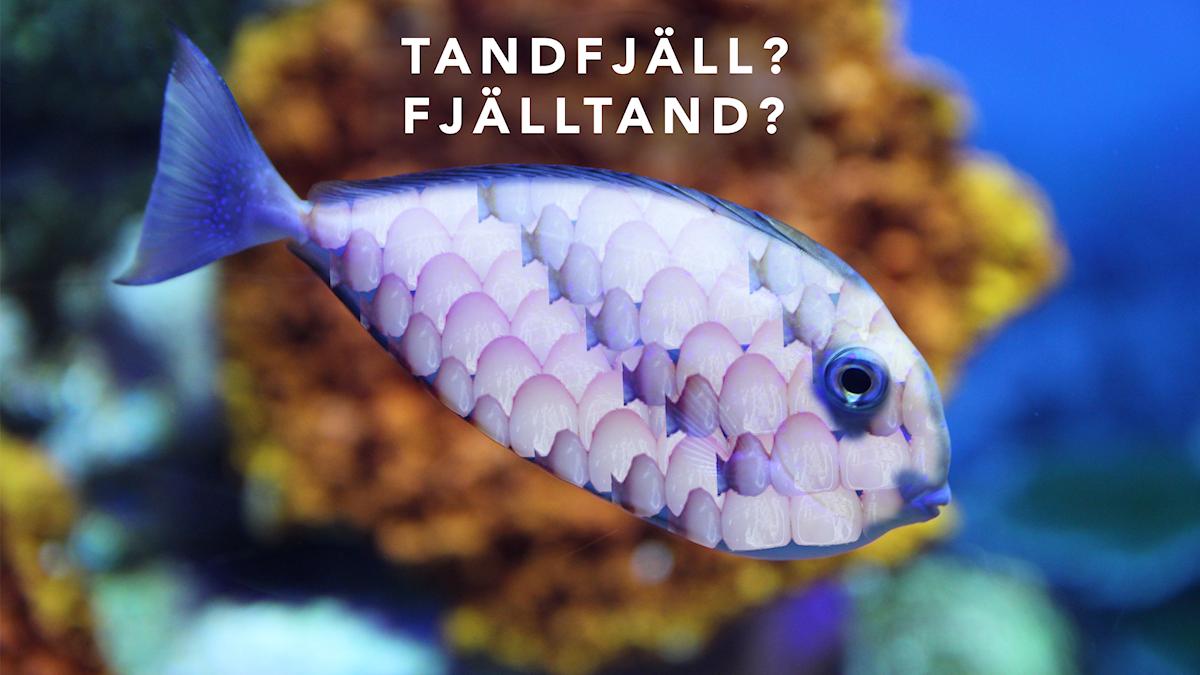 Fisk med tänder som fjäll