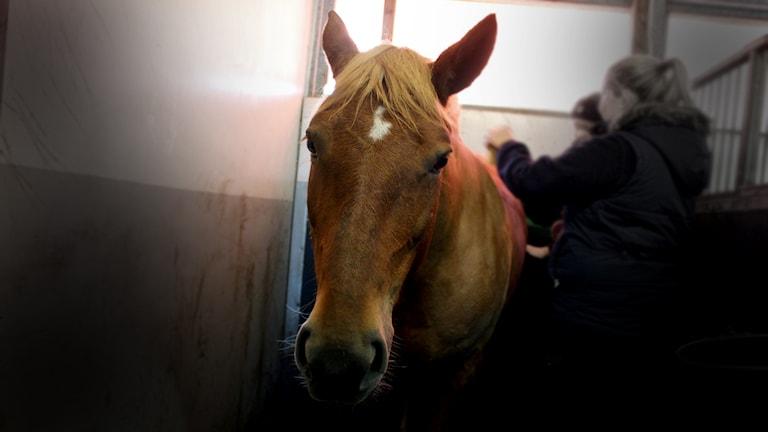 En häst i ett stall