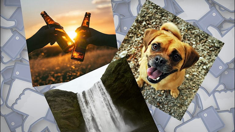 Bild på öl, en hund och ett vattenfall. I bakgrunden likes-tummar.