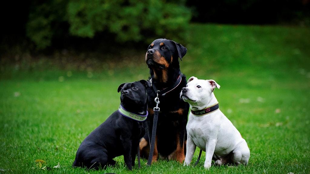 Hyresvärdar måste tillåta husdjur, så länge det inte är ett allergihus.
