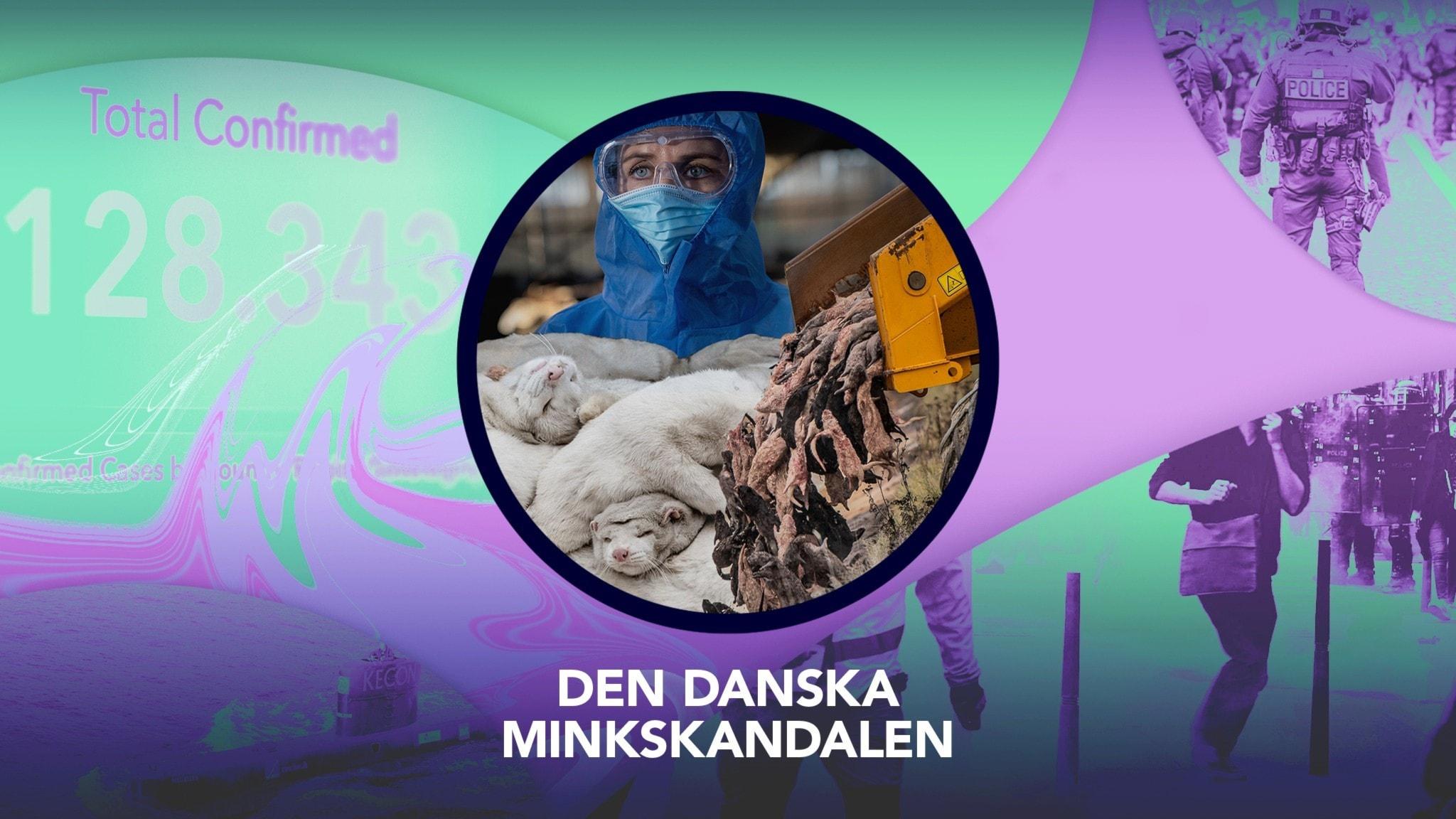 Omslagsbild P3 Nyheter Dokumentär, Mette Frederiksen i skyddskläder, döda minkar.