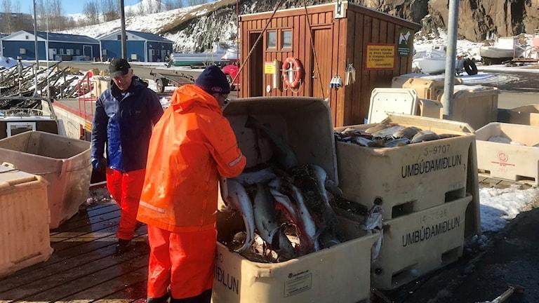 Fiskare i Akureyri