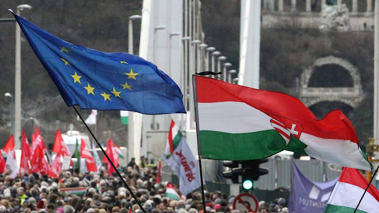 Ungerska demonstranter håller EU- och ungerska flaggor under en demonstration mot premiärminister Orban och hans parti Fidesz.
