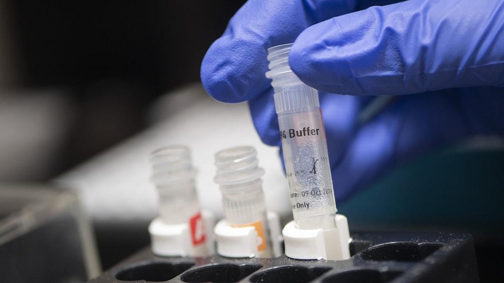 En labbingenjör från uppsalaföretaget A23 lab förbereder en pipetteringsrobot med PCR-plattor. Företaget analyserar coronaprover.  Foto: Fredrik Sandberg / TT