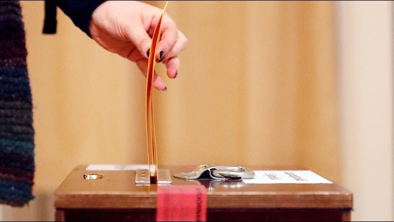 Person röstar på Island.