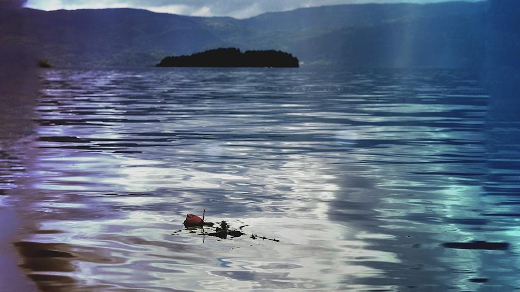 En ros flyter i vattnet utanför ön Utöya.