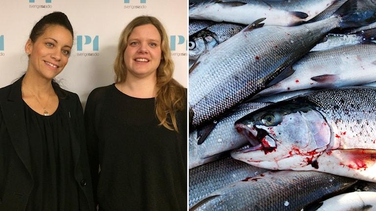 Minna Epps, verksamhetschef för MSC i Skandinavien och Frida Bengtsson, som jobbar med havsmiljöfrågor hos Greenpeace.