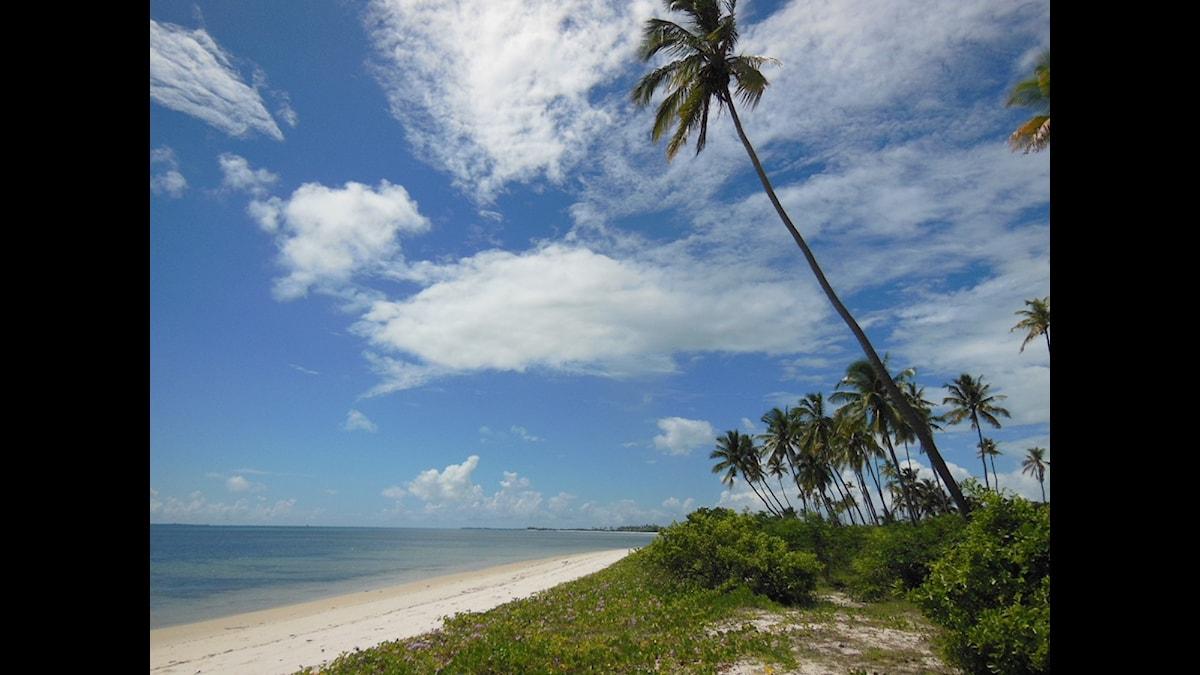 En av paradisstränderna i norra Mocambique. Foto: Maria Sjöqvist/SR